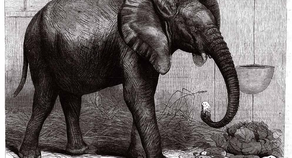 Cleaning Up After the Elephant in the Room